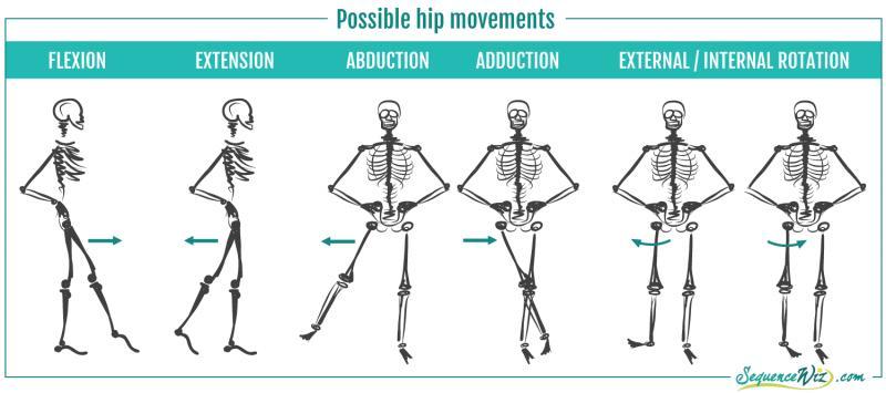 Hip Flexors  Strong Glutes Creating A Balance - Peninsula