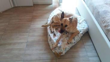 E vai così! Anche Matilde ha trovato casa! Buona vita bravissima cagnolona!