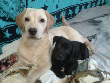 Ronnie ora Aslan e la sua nuova sorellina