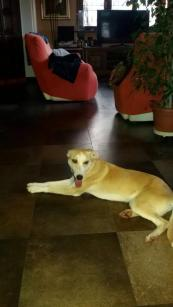 Sasha: salvata dalla Sicilia ora finalmente è amata in una casa, è un piccolo terremoto..