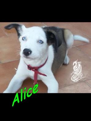Alice occhi azzurri