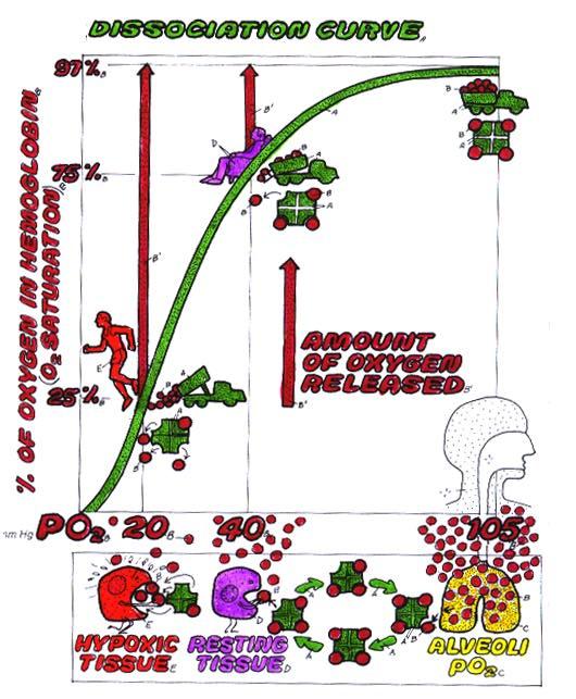 Oxyhemoglobin Dissociation Curve Archive - WWWNURSE-ANESTHESIAORG