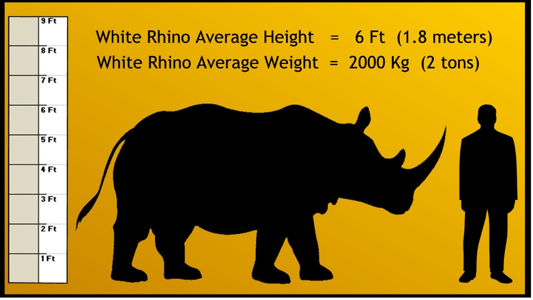 Peoria Zoo Weights and Measurements - Peoria Zoo - weight by measurements