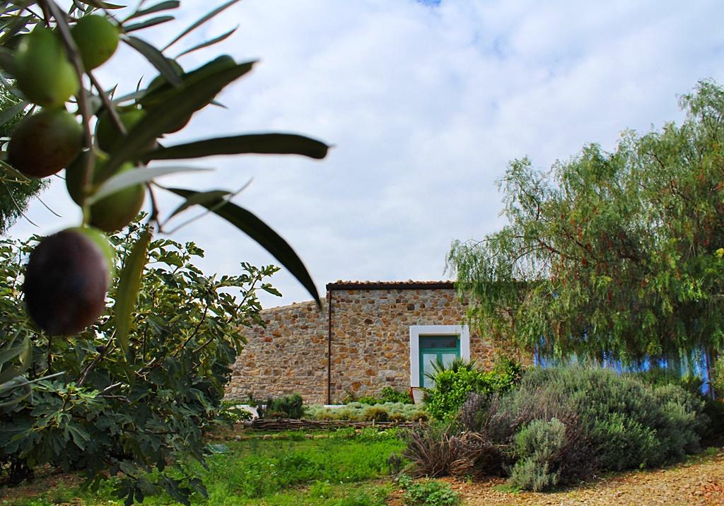 piante aromatiche e olive