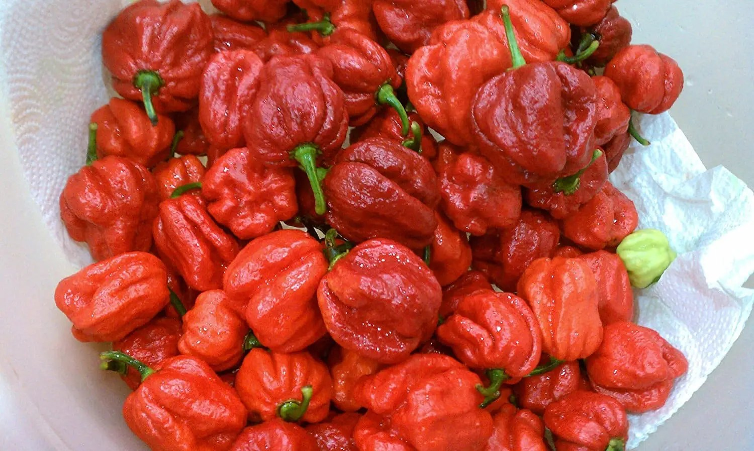 Fullsize Of Pepper X Scoville