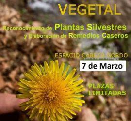 Taller de Reconocimiento de Plantas Silvestres y Elaboración de Remedios Caseros