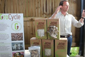 grocycle mushrooms grown on coffee waste