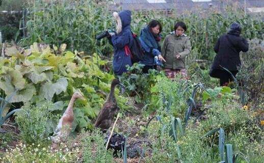 Schumaker College has raised garden beds