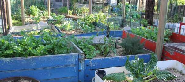 transported raised beds at Earth Keepers in Buxton NSW