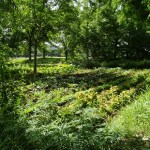 agriculture permaculture agroforesterie