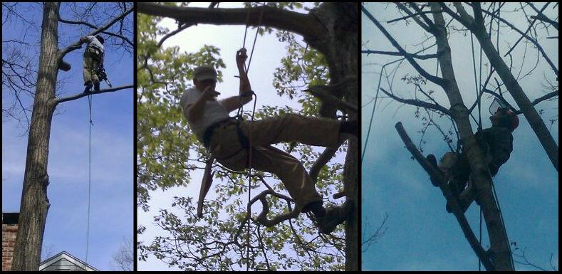 tim in tree