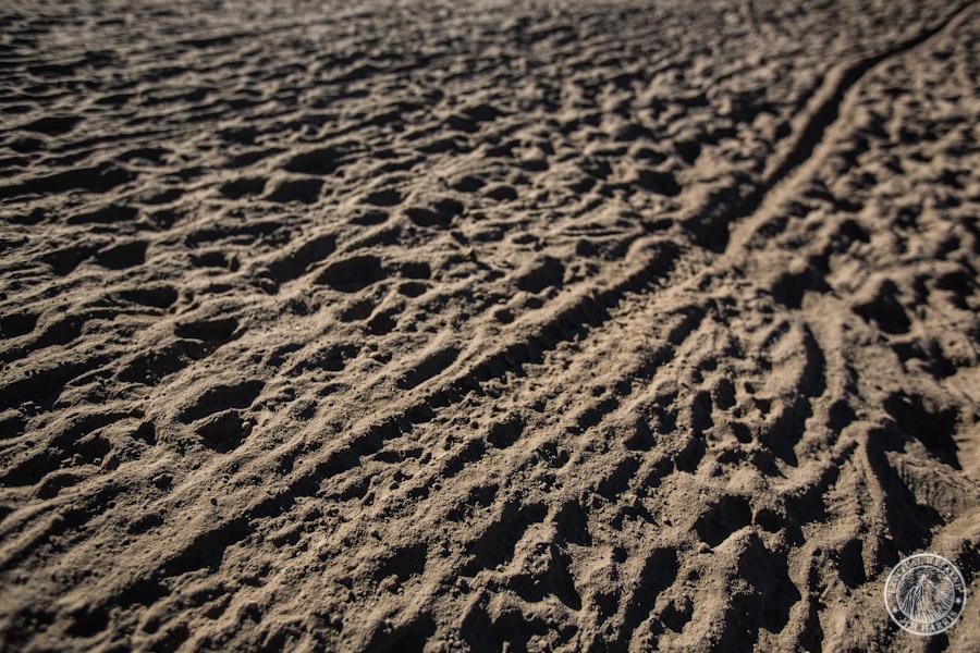 Bike tire and sheep tracks in the powdery volcanic moon dust