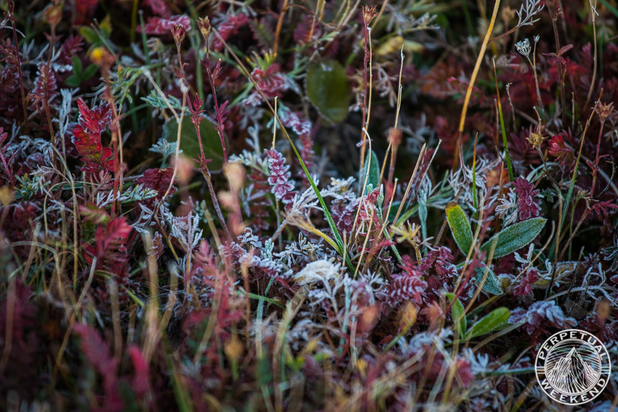 Frost on the alpine tundra.