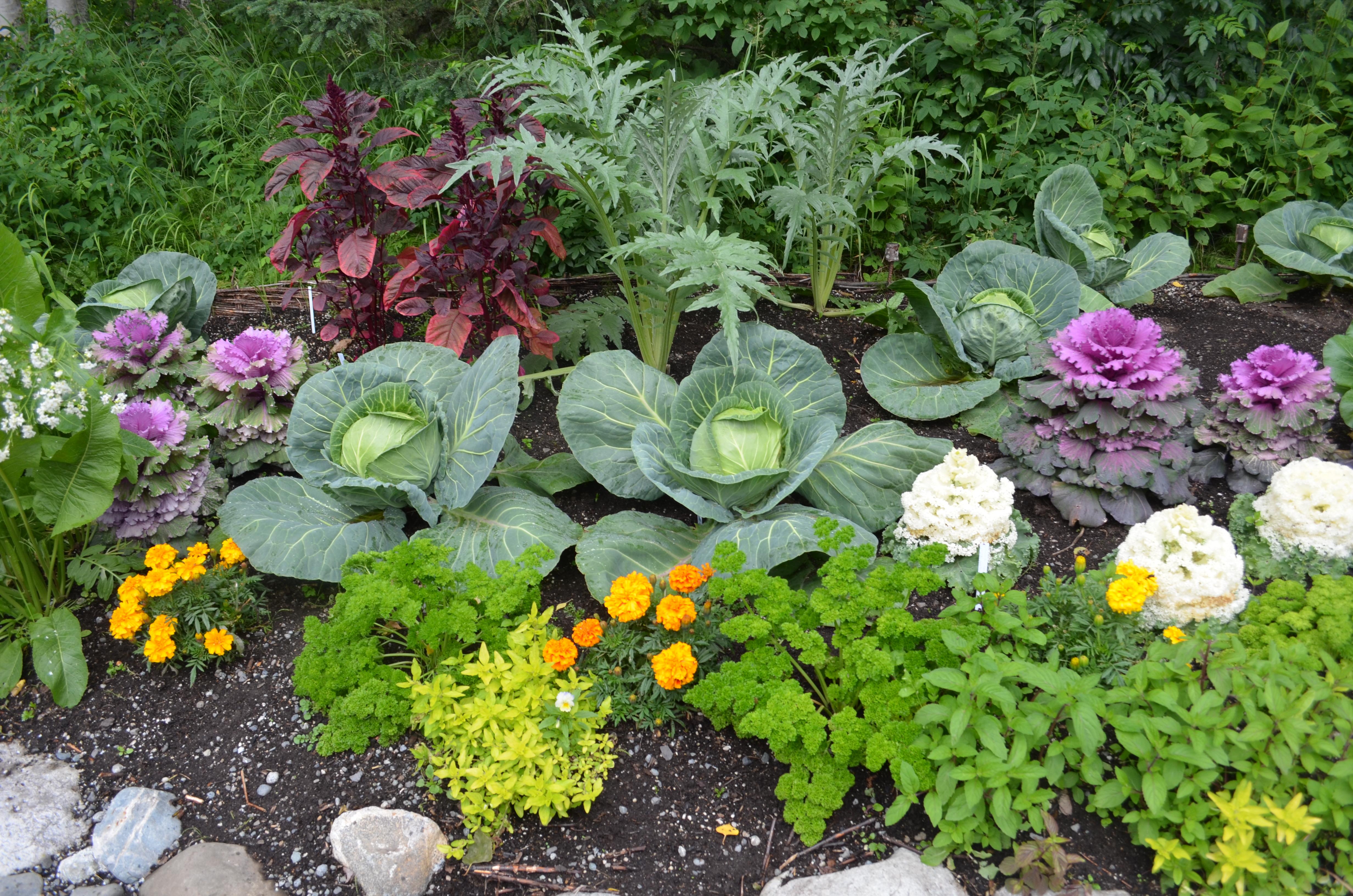 Fetching Flower Vegetable Garden Ideas Design Ideas Of Vegetable Garden Ideas Exellent Garden Design Vegetables Andflowers Container Ideas Flower garden Vegetable Garden Planters Ideas