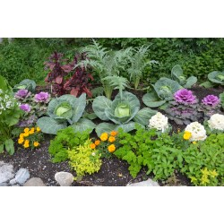 Small Crop Of Vegetable Garden Planters Ideas