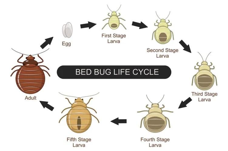 Bed Bug Control Treatments - Sydney\u0027s Best Pest Control