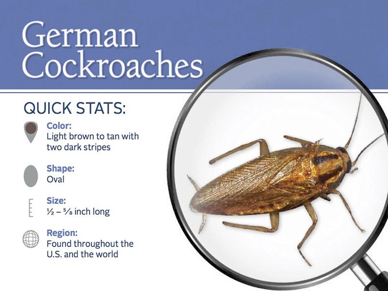 4 Killer Methods to Get Rid of German Cockroaches Which Commercial