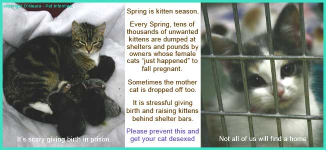 Feline Neutering - All About Male Cat Desexing