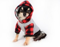 Buying Dog Clothes and Accessories - Pet Topics