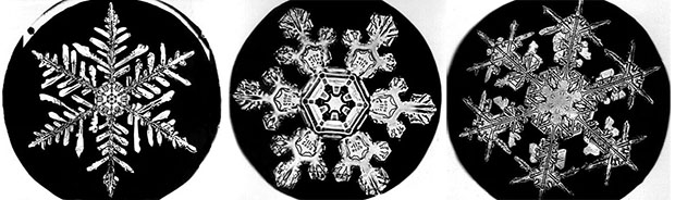 First Snowflake Photographs for Sale snowflakes