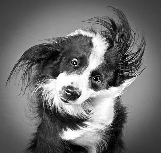 Portraits of Dogs as They Shake Off Water dog1