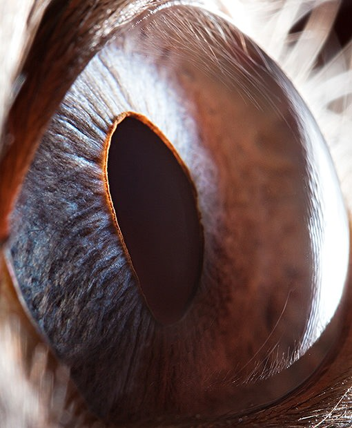 Amazing Macro Photos of Animal Eyes eye3 mini