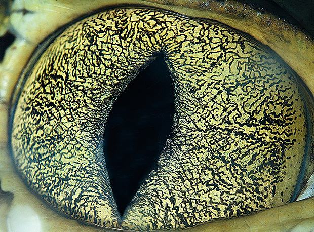 Amazing Macro Photos of Animal Eyes eye5 mini