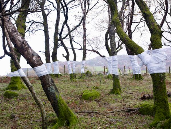 Amazing Photographs of Wrapped Trees Zander Olsen Tree Line 001 mini