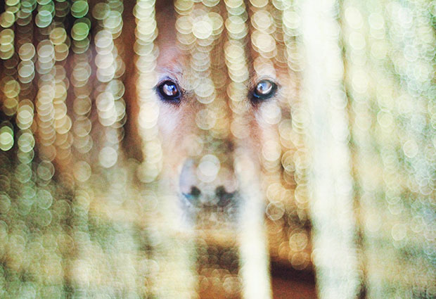 Teen Girl Shoots Beautiful and Creative Portraits of Her Pet Dogs dog2