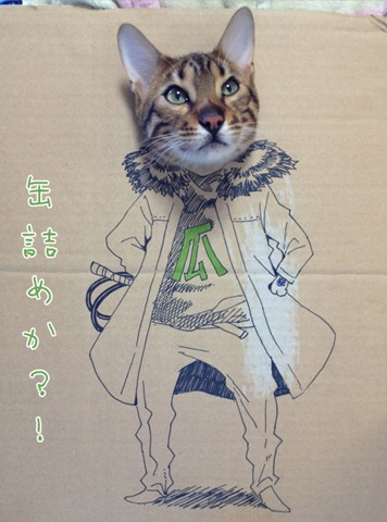 Clever Portraits of a Cat Using Sketches on Cardboard 