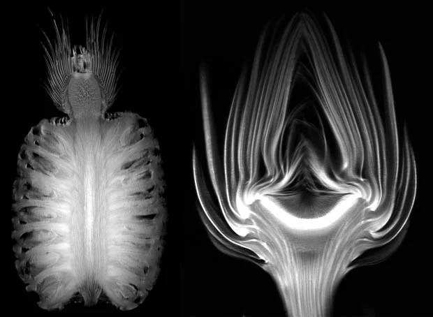 Beautiful Animations Showing MRI Scans of Fruits and Vegetables mri