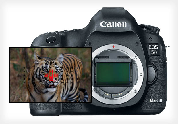 Canon 1D X style AF Illumination May Not Be Possible on the 5D Mark III canon5dredaf