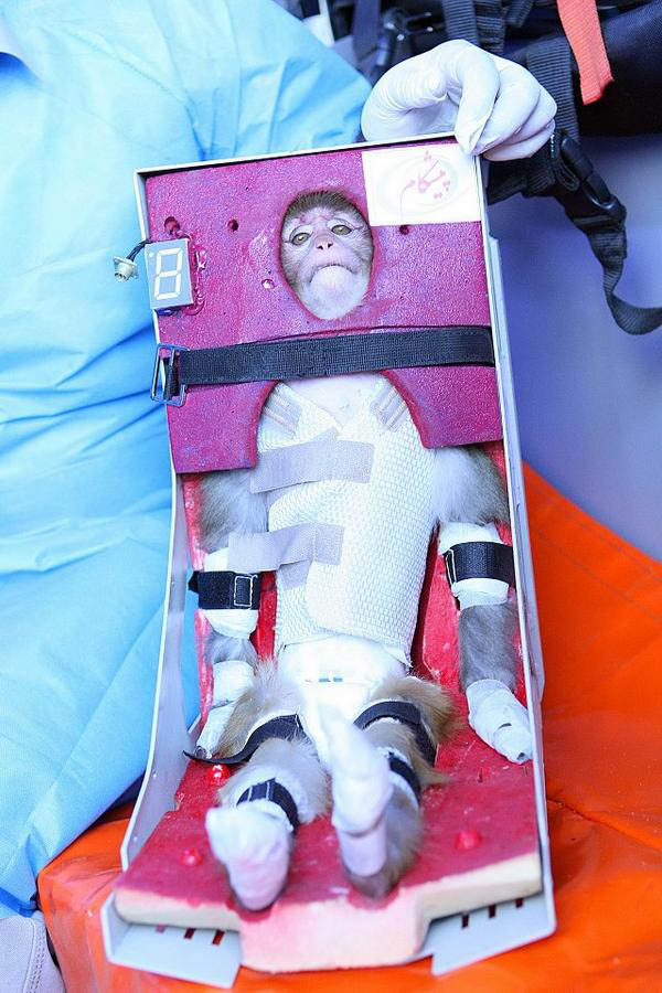 Iran Governments Strange Photos of the Monkey It Sent to Space scaredmonkey