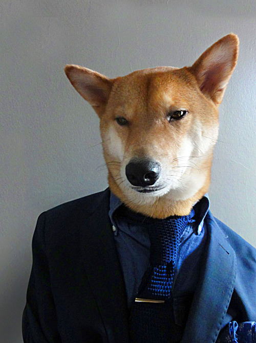 Menswear Dog Features Photos of Mens Fashion, Modeled by a Shiba Inu dogmenswear 1