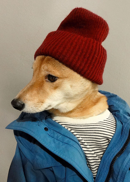Menswear Dog Features Photos of Mens Fashion, Modeled by a Shiba Inu dogmenswear 3