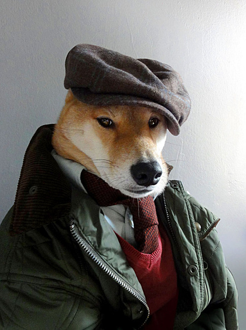 Menswear Dog Features Photos of Mens Fashion, Modeled by a Shiba Inu dogmenswear 7