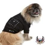 Bret Michaels Rocker Dog