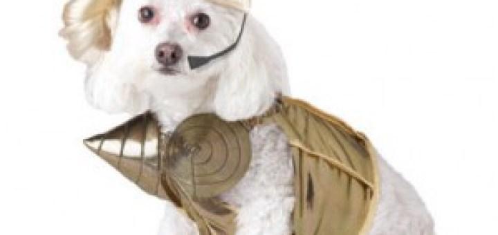 Madonna Dog