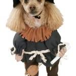 scarecrow dog costume