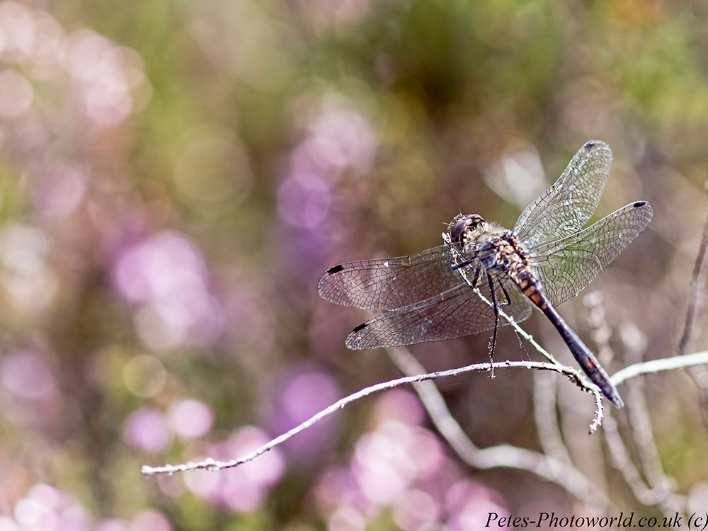 A trip to Thursley Common National Nature Reserve