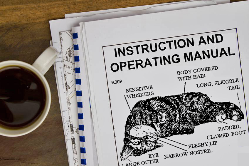 A 10-Step Instruction Manual for Your New Cat - Petful - instruction manual