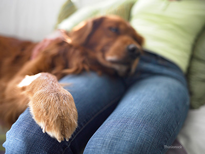 What Should You Do If Your Dog Has A Swollen Toe