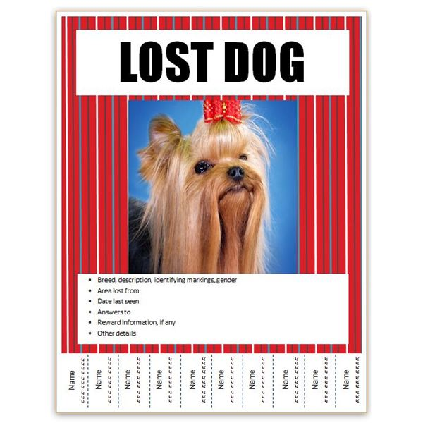 lost pet poster template radiovkm