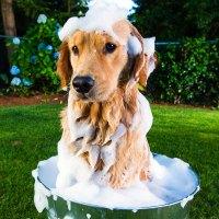 Does Your Dog Smell Like A Dog? | PetHub