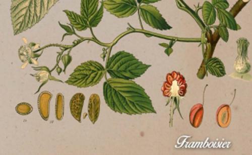 Gamme botanique