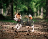 Hi-Vis Dog Jacket - Petlife Online