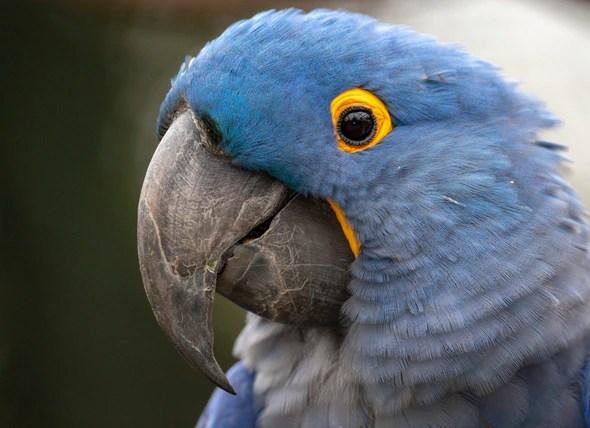 Five Inspiring Stories of Critically Endangered Bird Species That
