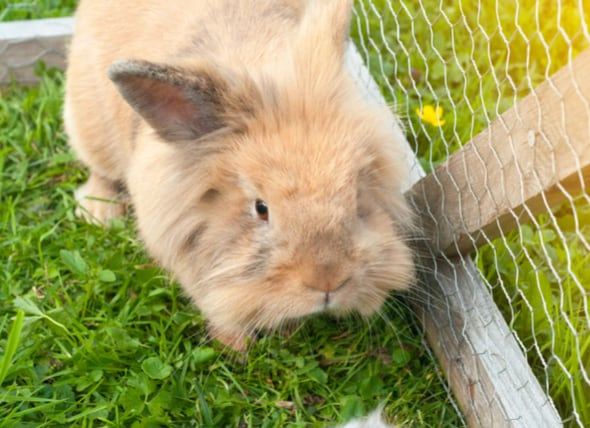 Easter is Not a Good Time to Get a Pet Bunny-Rabbit petMD