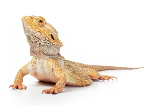 The 5 Best Reptiles and Amphibians for Kids petMD