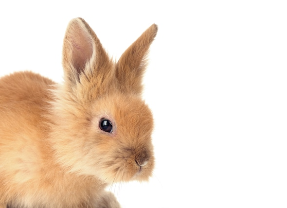 How Much Does it Cost to Care for a Rabbit? petMD